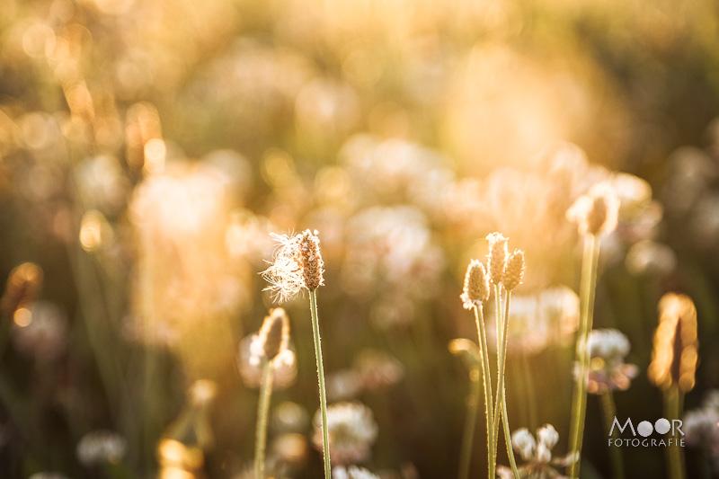 Het geheim van fotograferen in het Gouden Uur